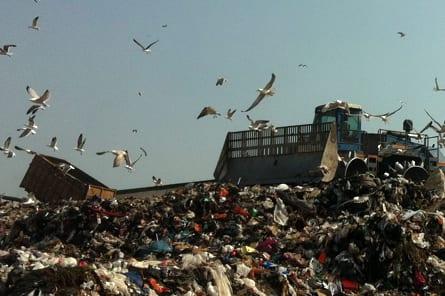Landfill bird control