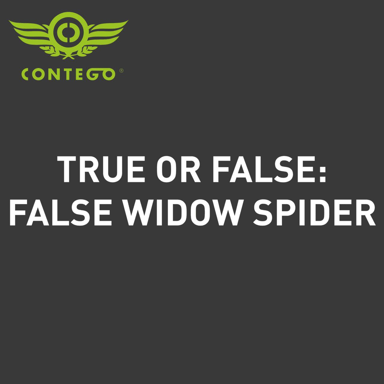 TRUE OR FALSE WIDOWN SPIDER
