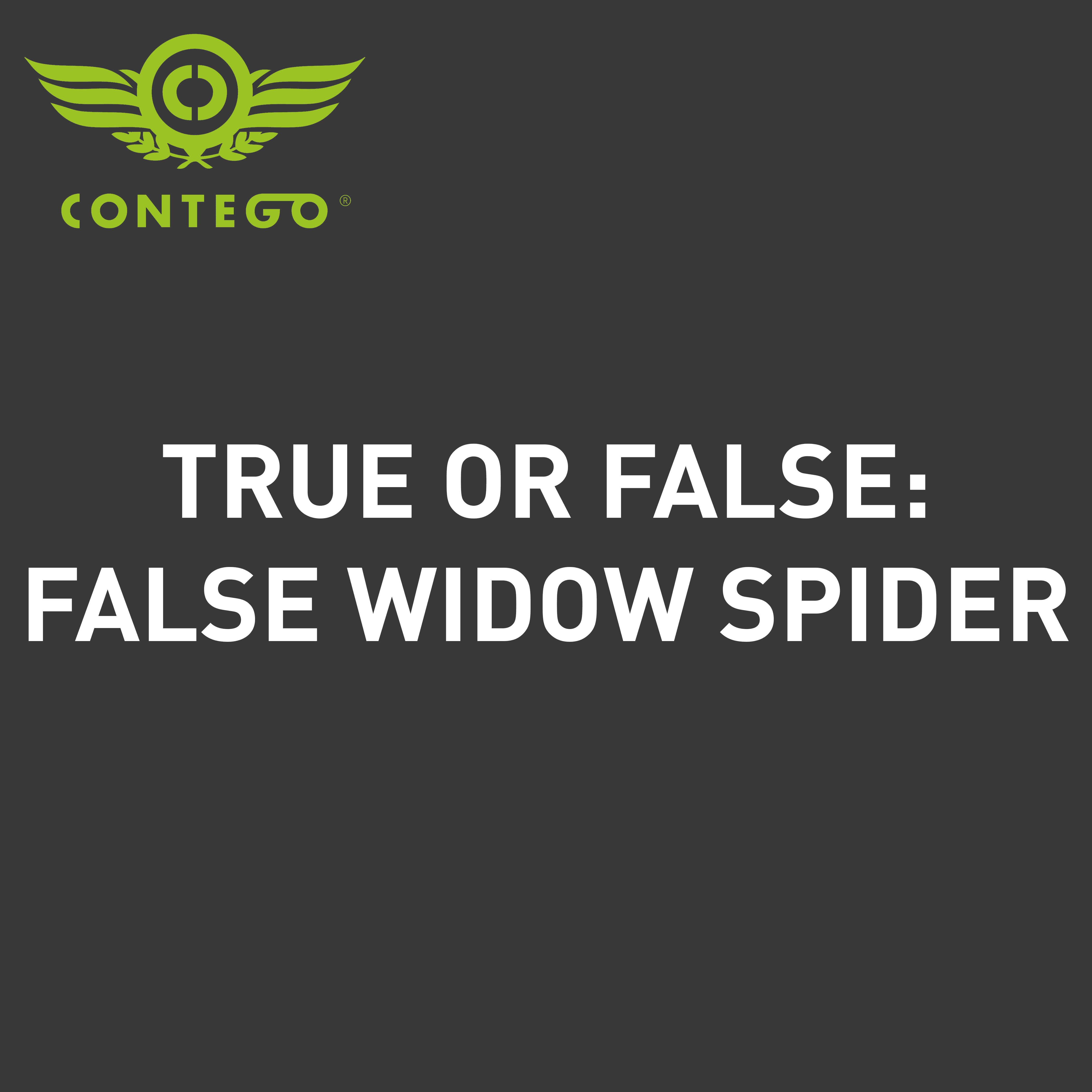 TRUE OR FALSE WIDOWN SPIDER